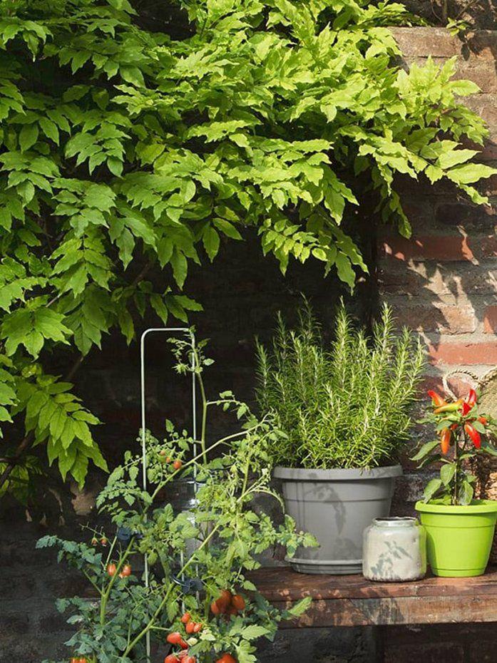 Sonnenanbeter Und Schattengewächse Alles Zum Lichtbedarf Von von Balkonpflanzen Für Pralle Sonne Bild