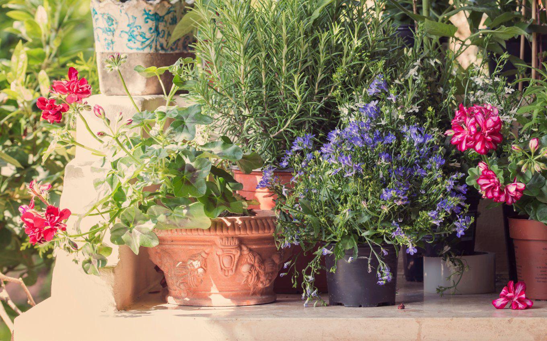 Tipps Zu Pflanzen Und Kräutern Für Balkon Und Garten  Mycard Von Viseca von Balkonpflanzen Für Pralle Sonne Photo