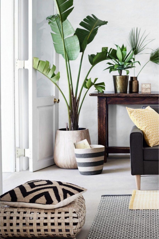 Verwunderlich Große Pflanzen Fürs Wohnzimmer Dekoration Fur von Schöne Deko Fürs Wohnzimmer Bild