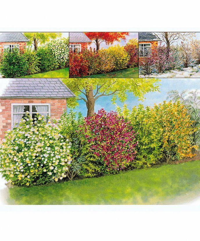 Vierjahreszeitenhecke  Bäume & Sträucher  Bakker  Garten von Chinaschilf Eulalia Als Hecke Bild