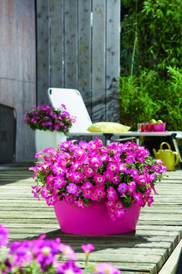 Welche Balkonpflanzen Für Sonnigen Balkon Wählen von Balkonpflanzen Für Pralle Sonne Bild