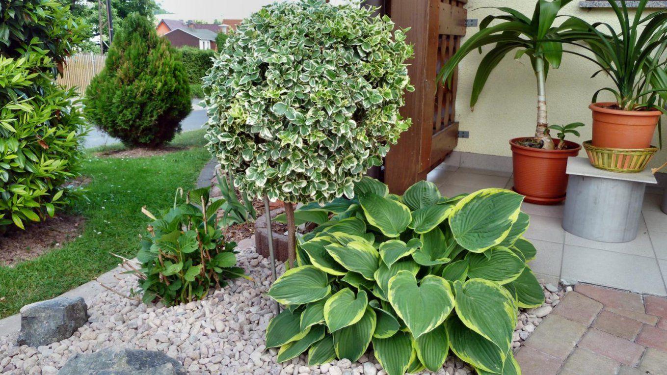 Welche Pflanzen Auf Die Nordseite  Hausgarten von Winterharte Exotische Pflanzen Für Den Garten Photo