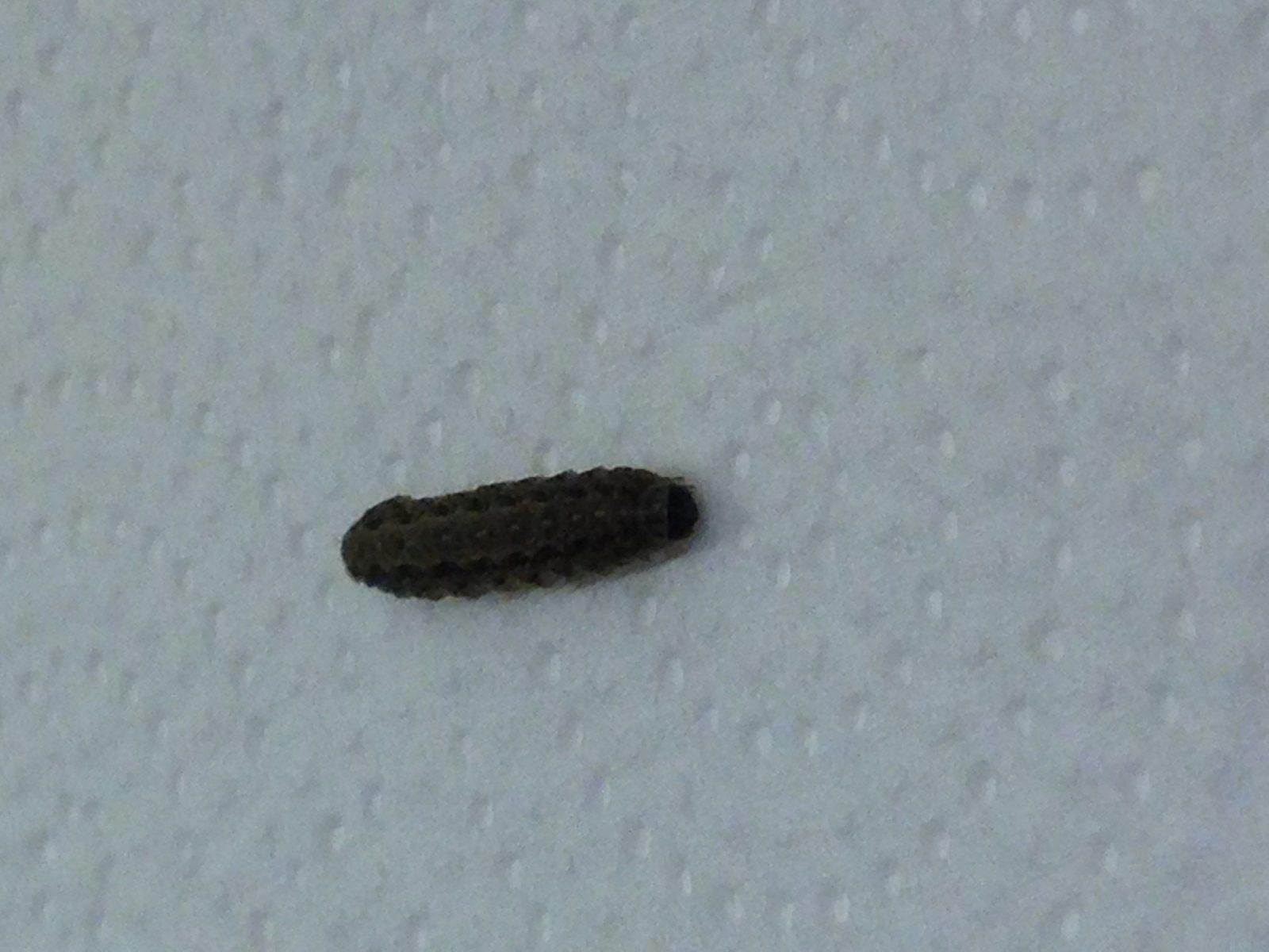 Würmer In Der Wohnung Frisch Layout Über Würmer In Der Wohnung von Maden In Der Wohnung Woher Bild