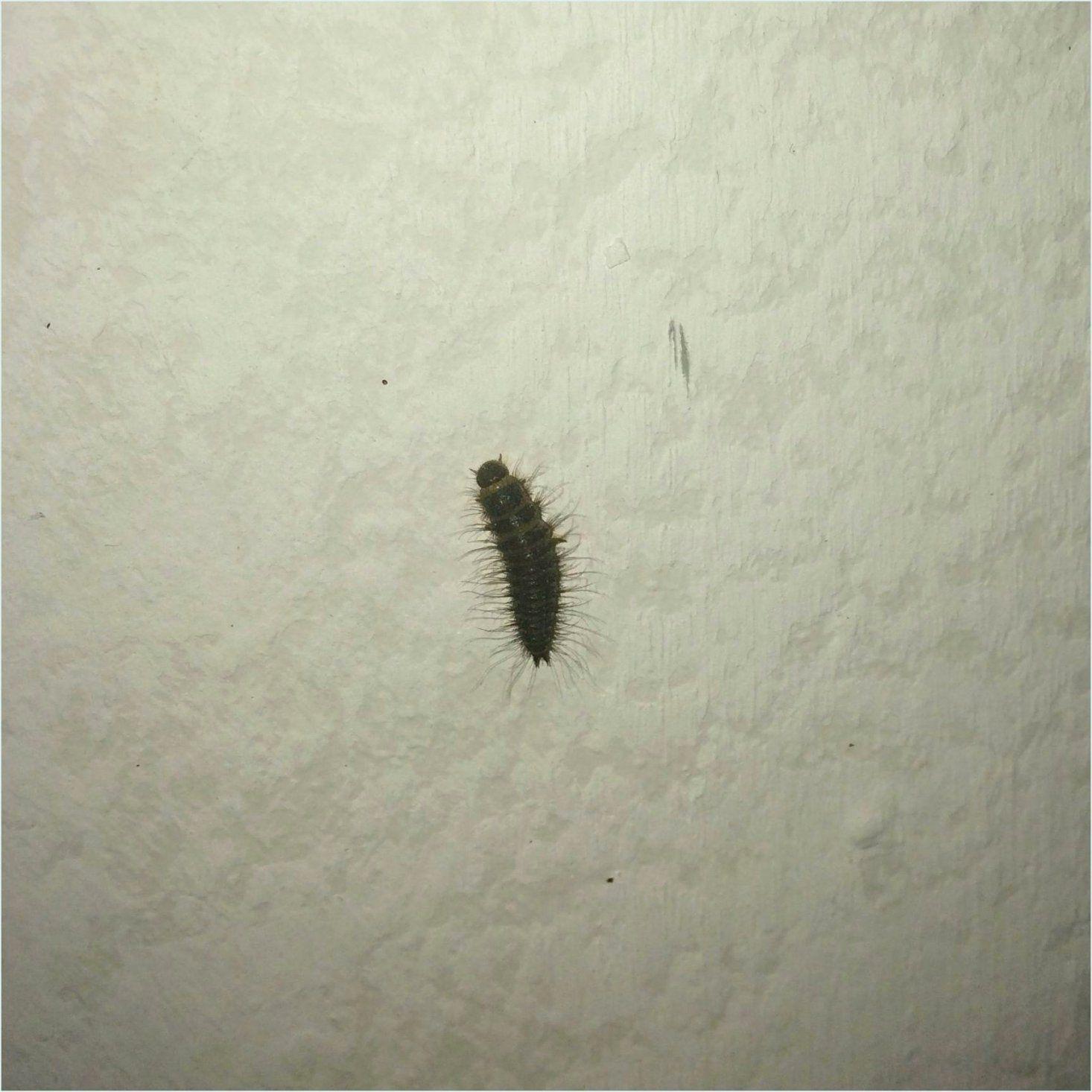 Ziemlich Würmer In Der Küche Zeitgenössisch  Die Kinderzimmer von Motten Maden An Der Decke Photo