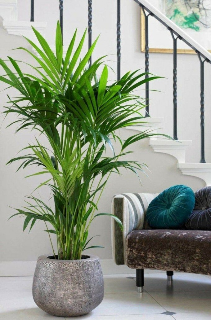 Kentia Palme Wohnzimmer  Indoor Pflanzen Dekor Wohnzimmer von Pflanzen Dekoration Wohnzimmer Photo
