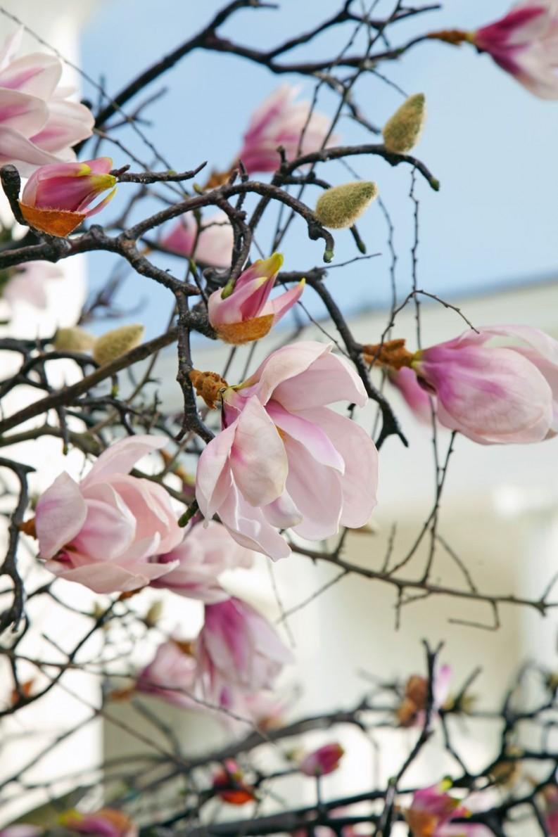 Vorteile Für Die Dekoration Mit Kunstpflanzen von Dekoration Blumen Künstliche Pflanzen Photo