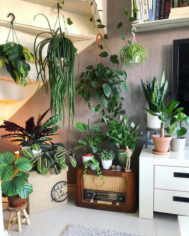 Pflanzen Dekoration Wohnzimmer Das Beste Von Deko Ideen Ecke von Pflanzen Dekoration Wohnzimmer Bild